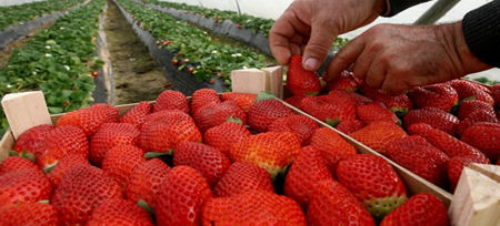Capacitan a agricultores sobre ley de modernización de seguridad alimentaria