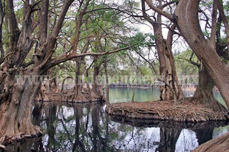 Fortalecen tratamiento de aguas residuales en lago de Camécuaro
