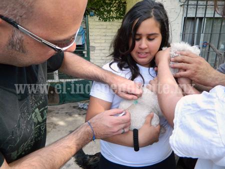 Más de 3 mil perros y gatos vacunaron contra la rabia