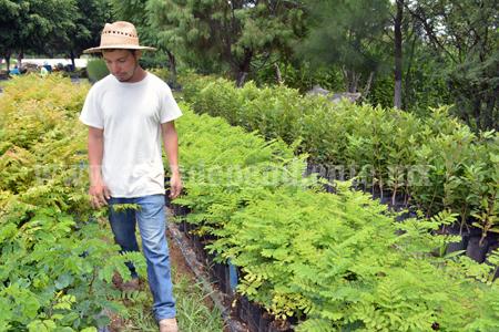 M s de 16 mil rboles y plantas en el vivero municipal de for Viveros en zamora