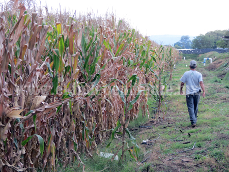 Región Lerma-Chapala aporta maíz, cebolla, jitomate, frijol y chile