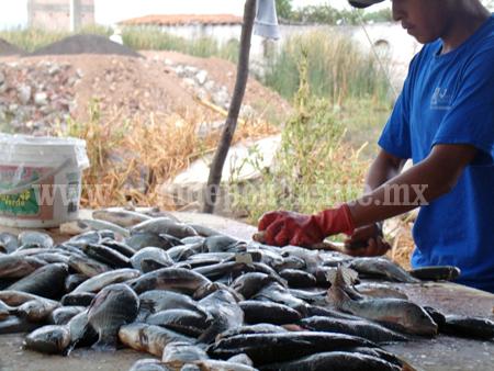 Afectan pescadores ilegales rentabilidad de actividad pesquera en el Lago de Chapala