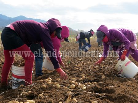 Granizadas acabaron con 300 hectáreas de papa
