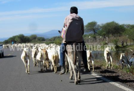 Se reducen zonas de pastoreo para caprinos en Villamar.