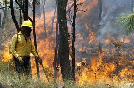 Michoacán pierde anualmente 60 mil hectáreas de bosque