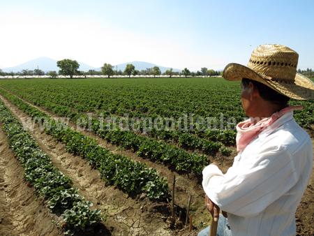 Altas Temperaturas no han afectado cultivos de berries, hortalizas y trigo