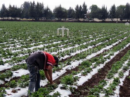 Piden a productores aumentar contratación de seguros agrícolas