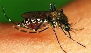 Confirman 18 casos de dengue clásico en Zamora