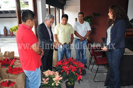 Compromete Salvador Jara respaldo a productores de flor de nochebuena para incrementar comercialización