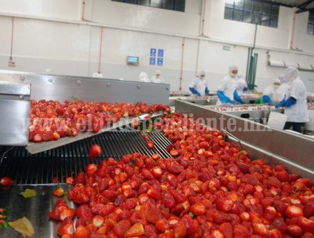 Se duplicó número de  empresas exportadoras de fresa en la región