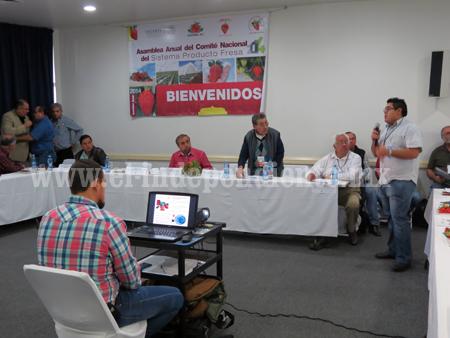 Michoacán sigue siendo primer lugar  en producción de fresa