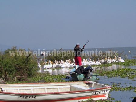 Señalan corrupción de Guardias Federales de Pesca