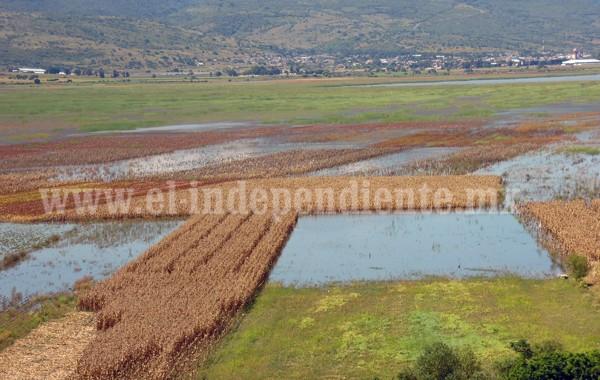 Incrementa superficie de agricultura por contrato