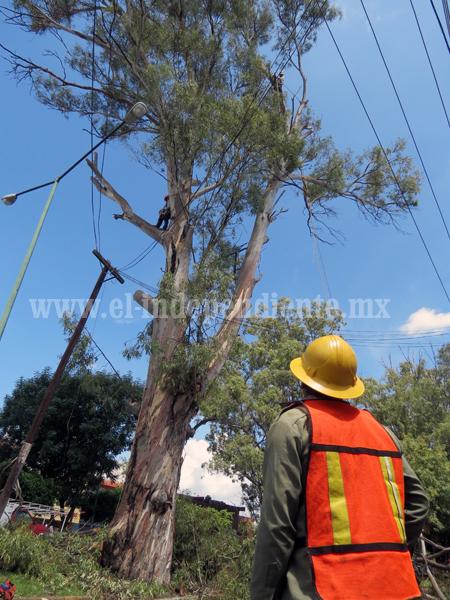 CFE realizó poda  de árboles gigantes