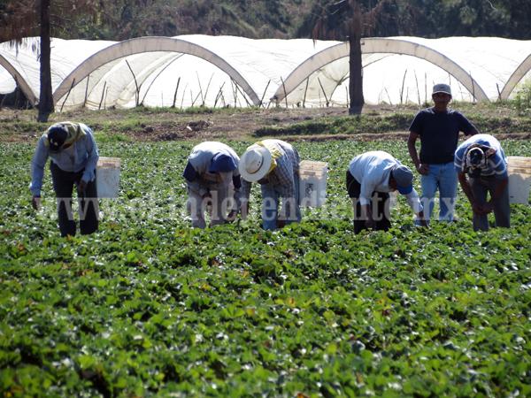 Sin  industria,  el campo seguirá siendo la principal fuente de trabajo en la región