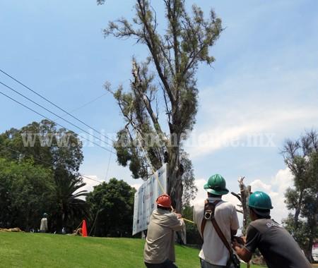 Detectaron 35 árboles riesgosos para la población