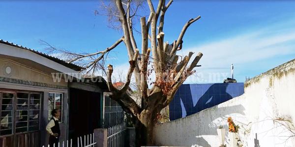 Podan árboles en el panteón municipal