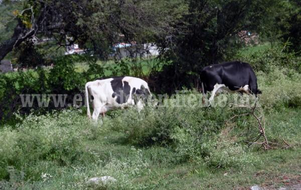 Comercializaron carne de reses muertas por rabia paralítica bovina