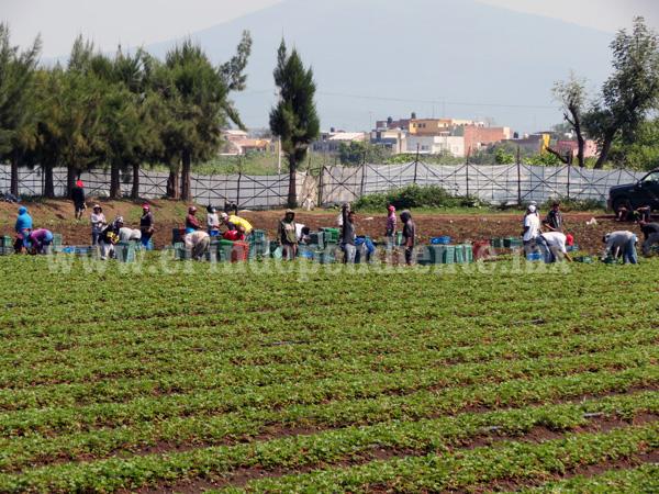 Procuraduría Agraria busca acerca a los jóvenes a ejidos y comunidades agrarias