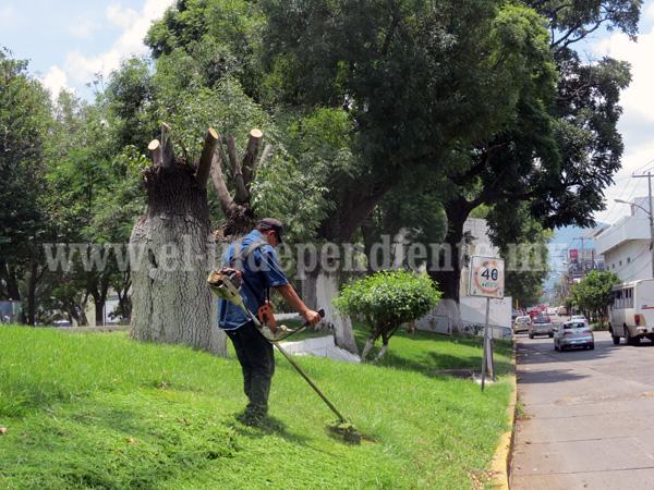 Autoridades alistan conclusión de programa preventivo de riesgo de árboles