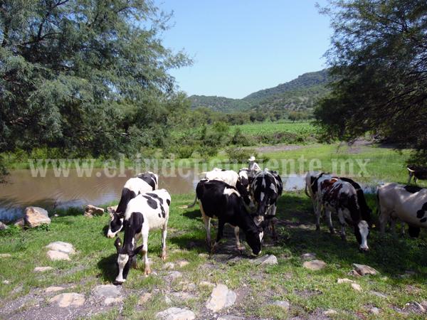 Incrementan ingresos de ganaderos locales