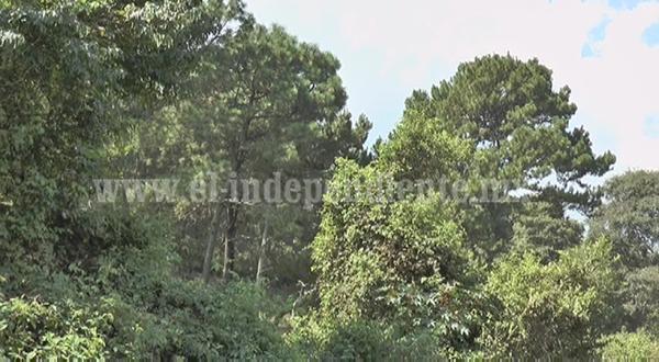 Preocupa a autoridades indígenas deforestación de sus bosques.