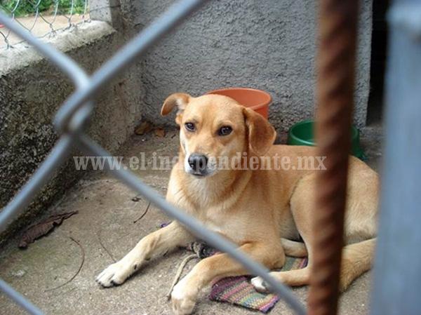 Lamentable la cultura de protección animal en Zamora