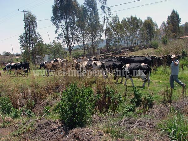Formalizan petición para reubicar centro de control de brucelosis y tuberculosis bovina