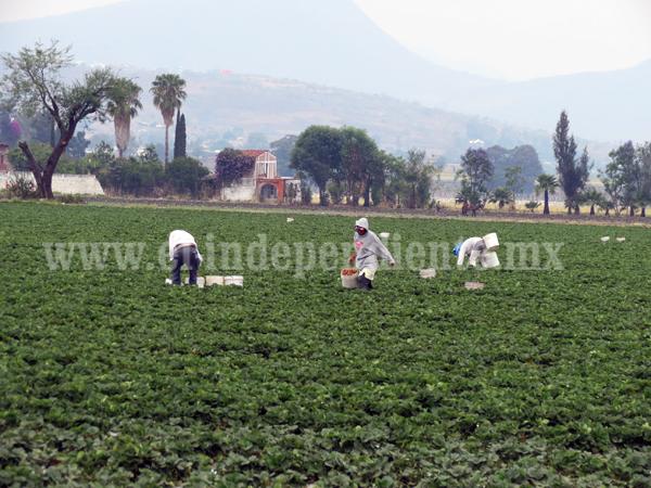 Más de 3 mil hectáreas de berries y hortalizas a cultivar en  el Módulo 1