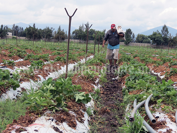 Patricia no afectó la agricultura de la región