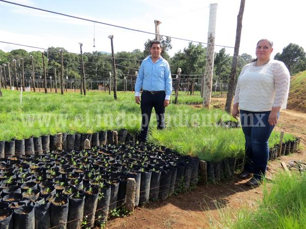 Garantizan recuperación de mil hectáreas en abandono y con deforestación