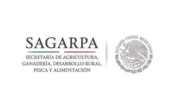 Michoacán, primer lugar nacional  en producción agrícola: SAGARPA
