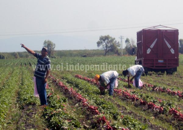 Buscan erradicar trabajo agrícola infantil