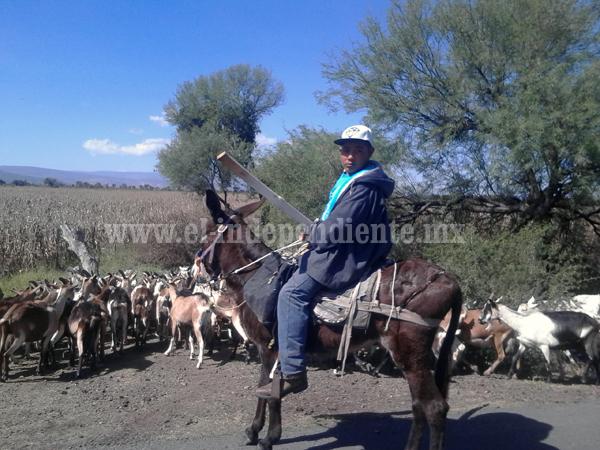 Buscan mejorar genética del ganado caprino