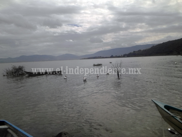 En riesgo atractivo turístico de pelícanos borregones en Petatán