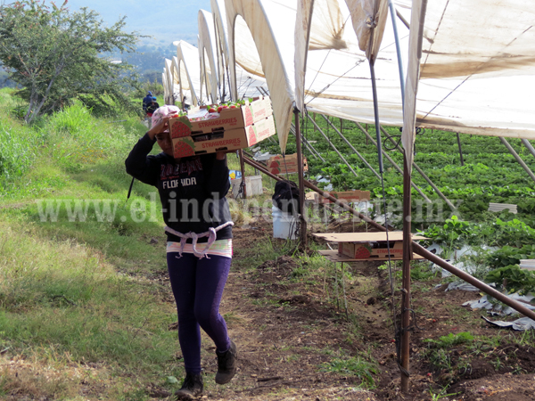 Pese a bajas temperaturas no hay daños en la  agricultura de la región Zamora: SAGARPA