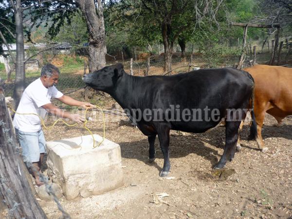 Mejora en el precio del ganado bovino no beneficia la situación del sector