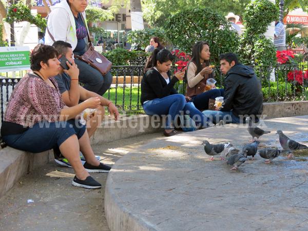 Aplicarán control de aves en zona de la plaza principal