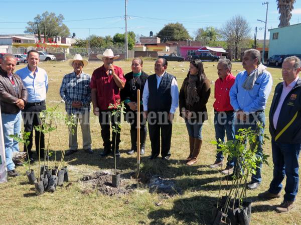 Reforestarán zonas verdes para mejorar calidad ambiental en zona urbana