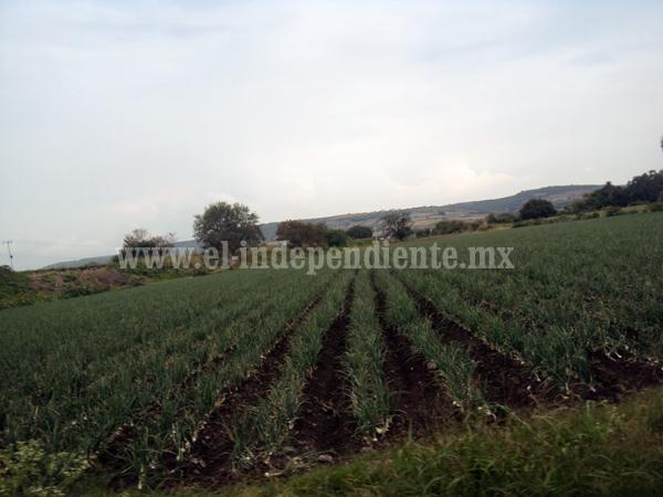 Intentan recuperación de tierras ejidatarios de Los Granados