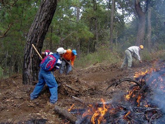 Totalmente sofocado, el incendio forestal en la zona de la Monarca