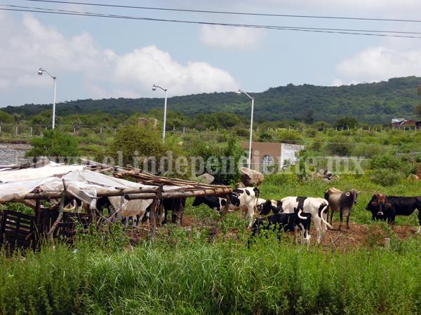 Denuncian robo de ganado