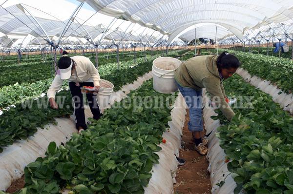 Habrá subsidio para productores  que contraten un seguro agrícola