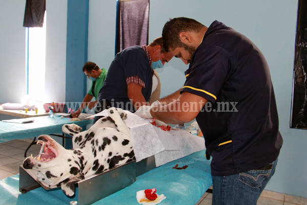 Ponen en marcha la campaña de esterilización canina y felina