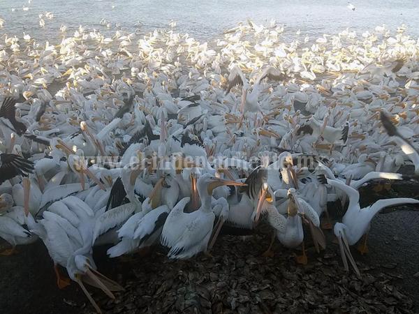 Secretaría federal retiene declaratoria de área Natural Protegida