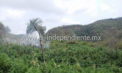 SSP incinera plantío de marihuana en Benito Juárez.
