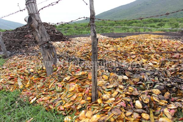 PROAM y SEMARNACC unirán esfuerzos para meter en cintura a agroindustrias