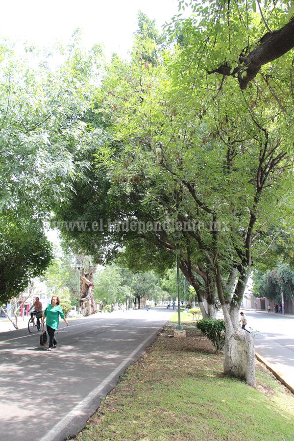 Harán revisión de estado de árboles en zonas riesgosas