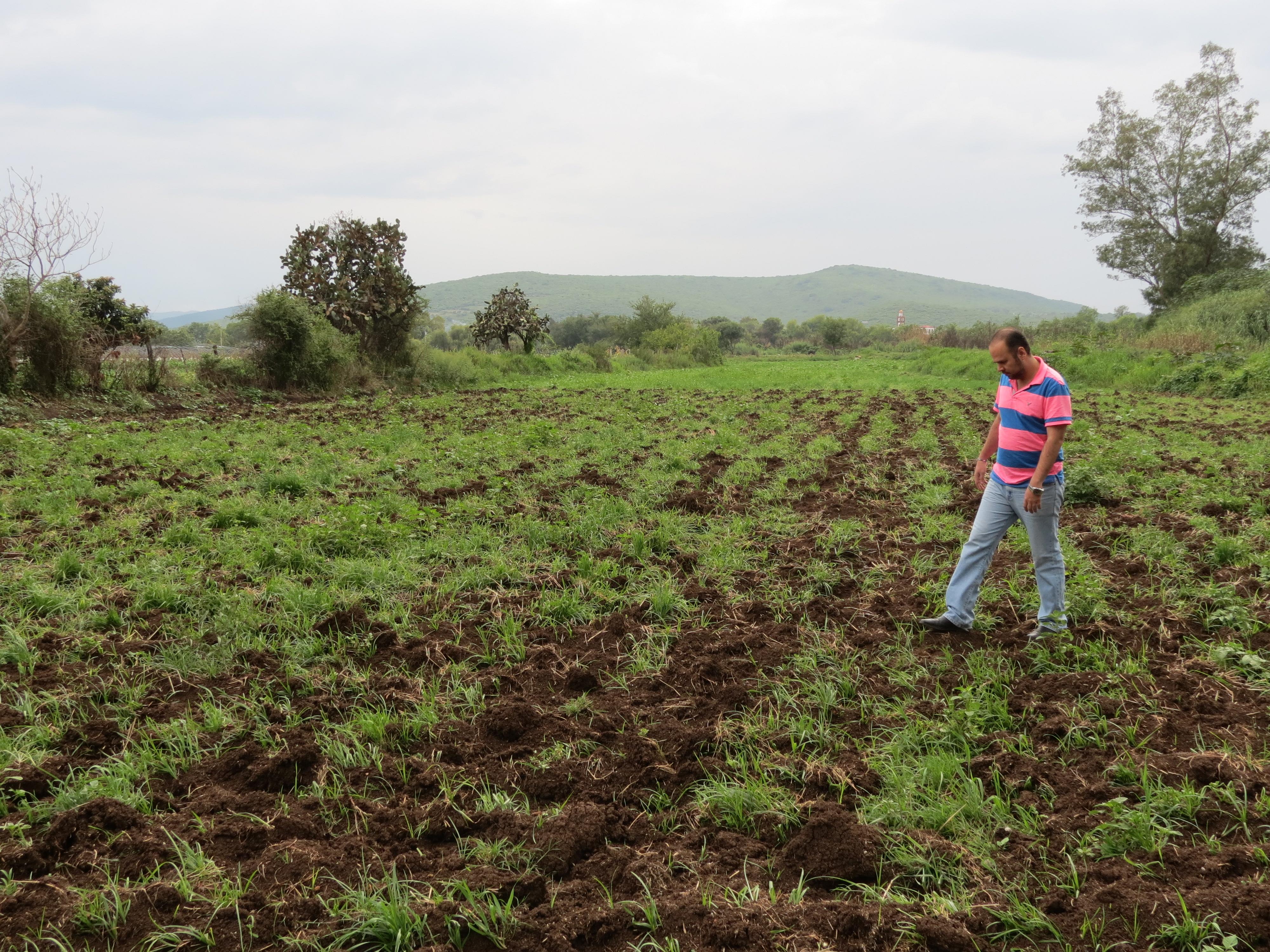 Lluvias propician afectación en 750 hectáreas de maíz
