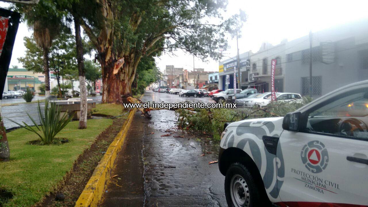 Fuerte lluvia al norte de Zamora deja un árbol caído y diversos encharcamientos